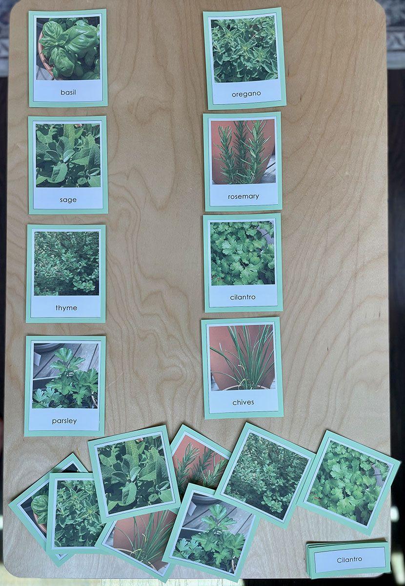 Tarjetas Montessori de 3 partes, plan de estudios de idioma Montessori, ¿cómo se usan las tarjetas Montessori de 3 partes?