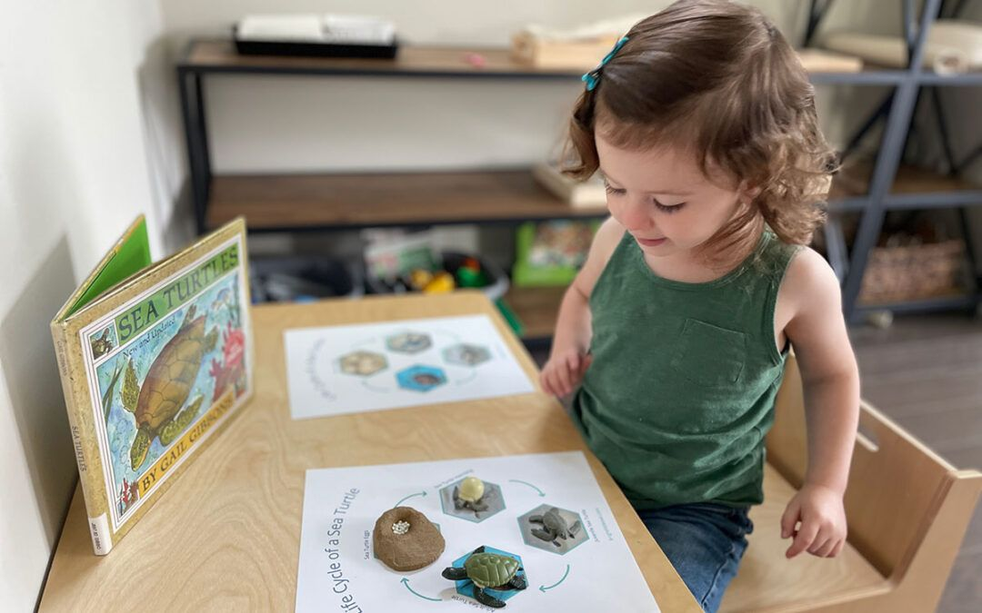 sea turtle activities, Montessori, life cycle of a sea turtle, language, science, printable, homeschooling