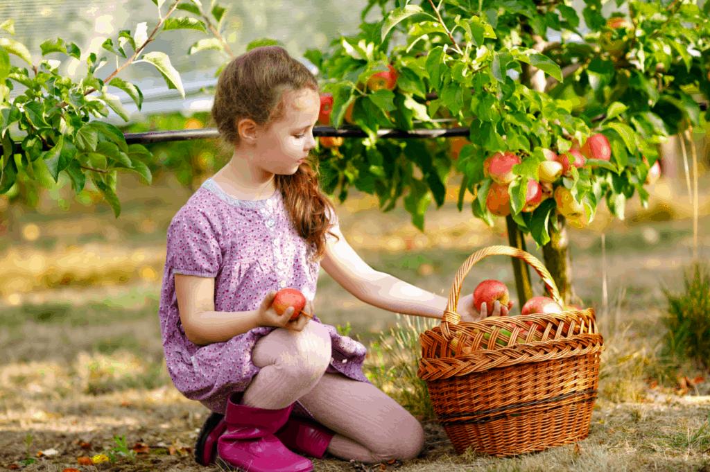 niña recogiendo manzanas