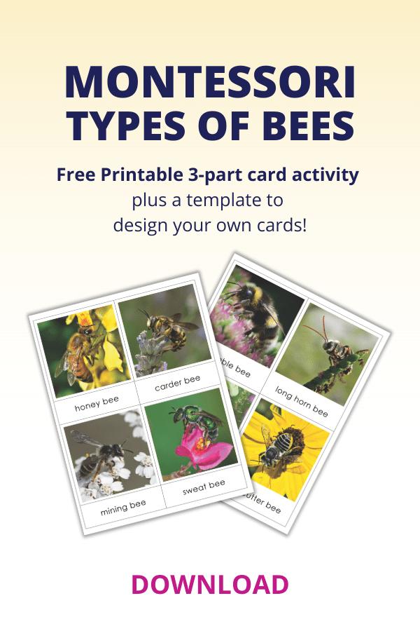 vocabulario para preescolares, tipos de abejas, tarjetas de 3 partes, montessori, currículo de idiomas, actividades, niño